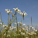 South Gare Flowers 1