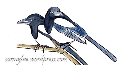 sketch of 2 magpies