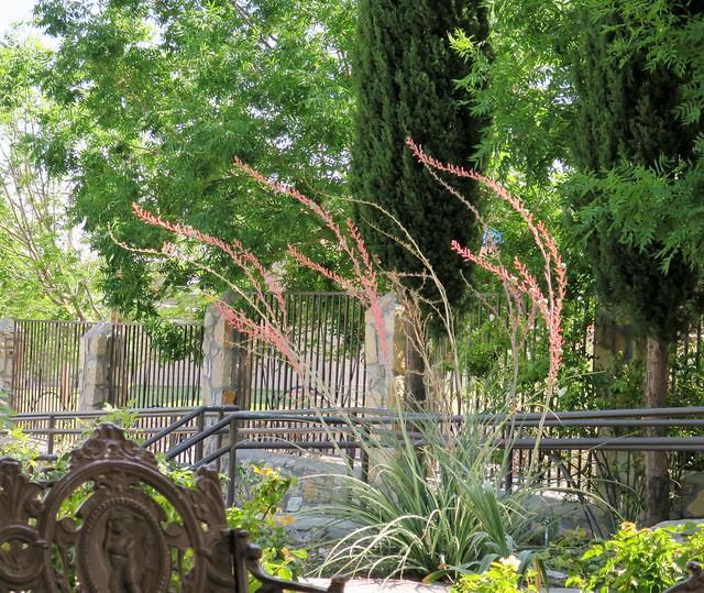 El Paso Municipal Rose Garden, Texas