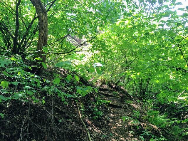 湧谷山 登山道
