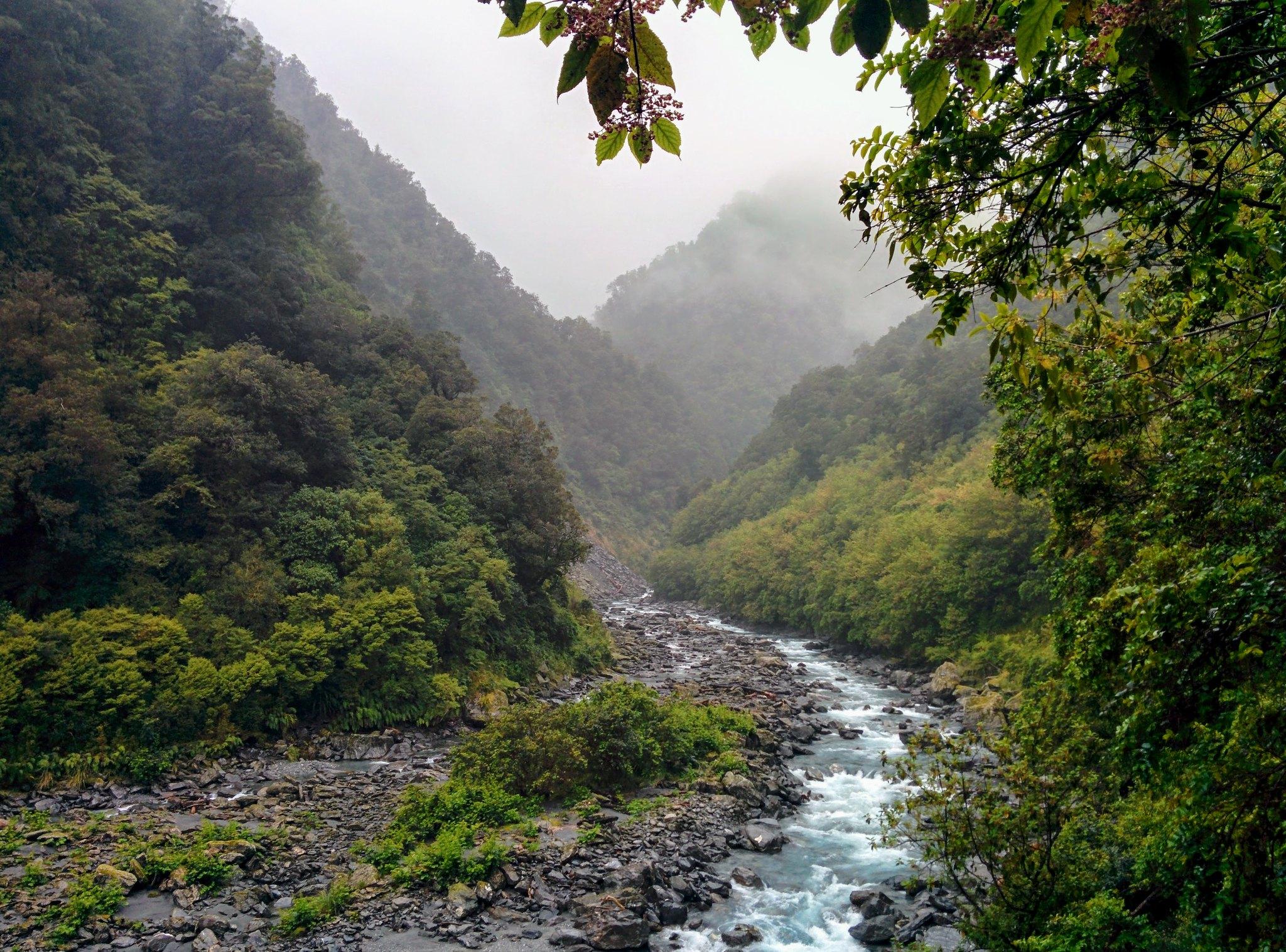A river running through the rainforest