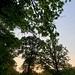 Evening sunlight 157:365 JF (2)