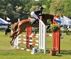 Paardensport / Equestrian