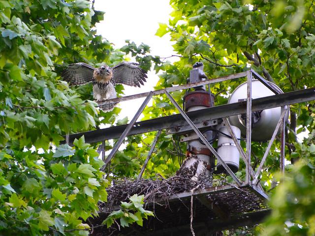 GT Hawk Nest - 0600