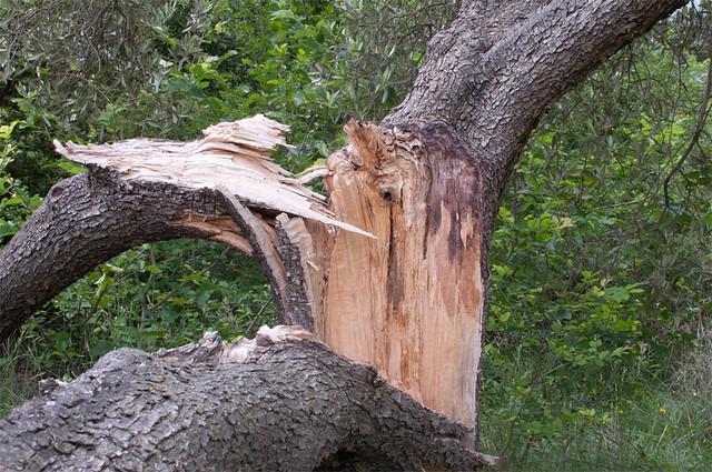 mezzo albero