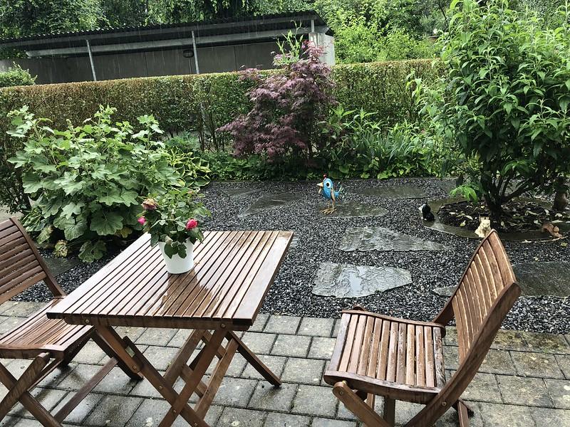 Rain in front garden