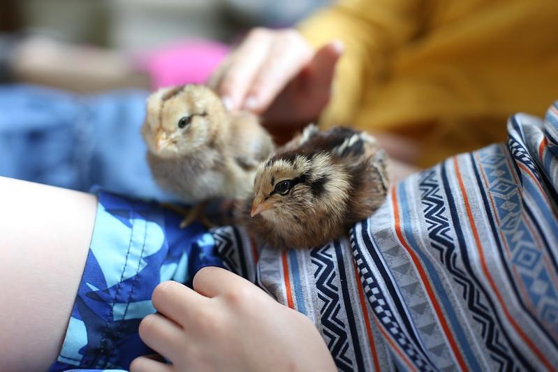 Hei Hei and Egger