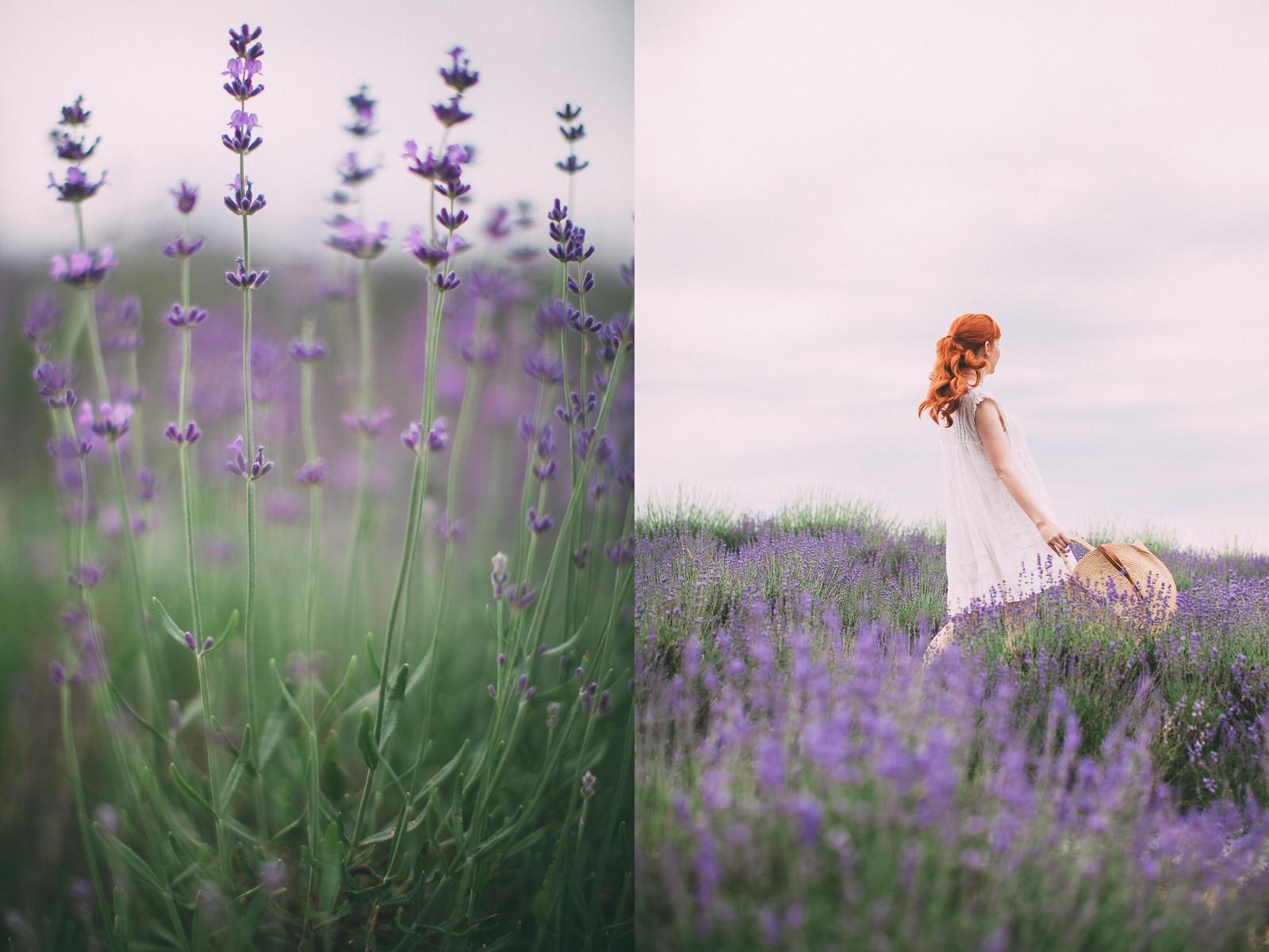 lavender-2-side