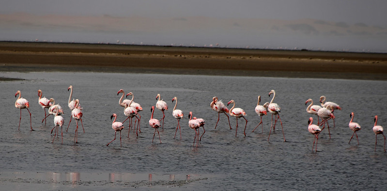 Flamencos Walvis Bay