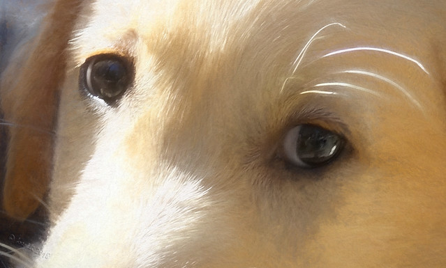 An animal's eyes have the power to speak a great language. (Martin Buber)