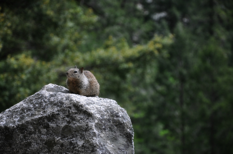 Yosemite Wildlife @ Mt. Hope Chronicles