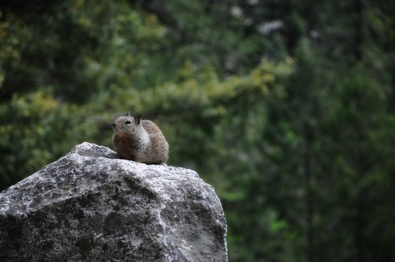 Yosemite Wildlife @ Mt. Hope Chronicles