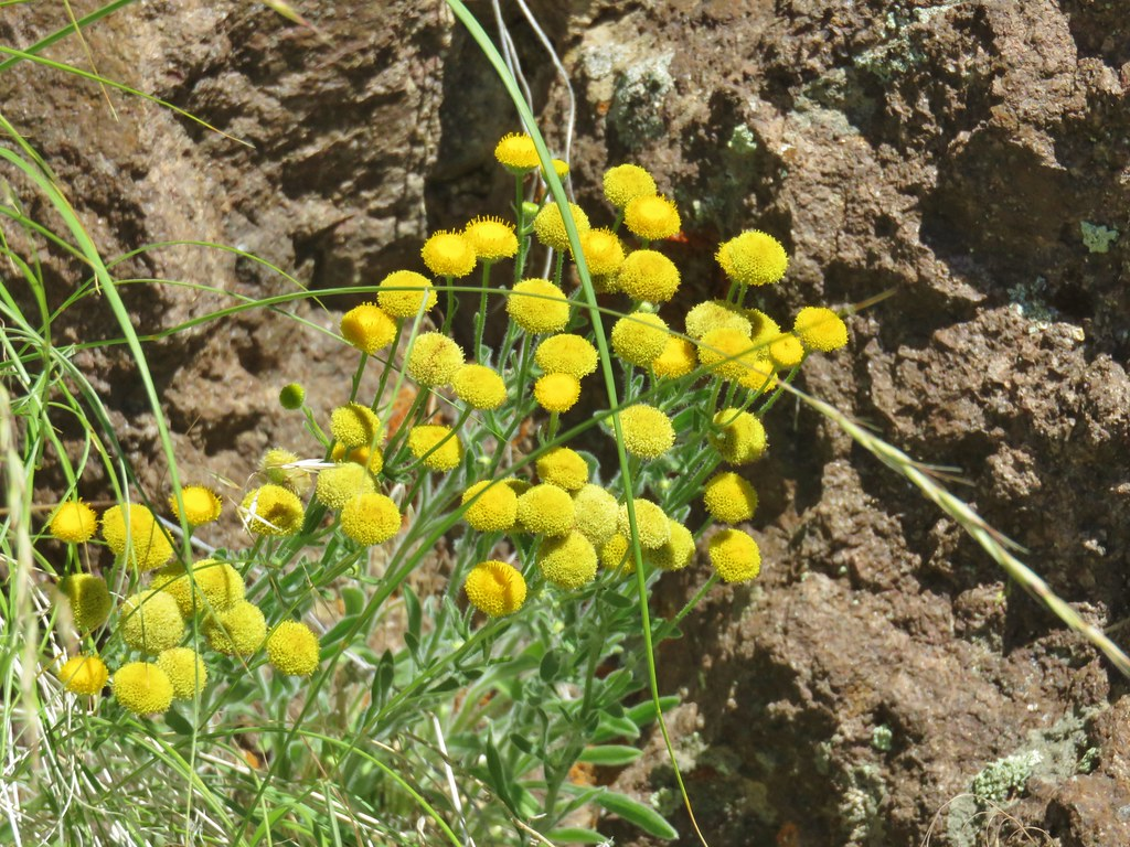 Wildflowers along the Owyhee River
