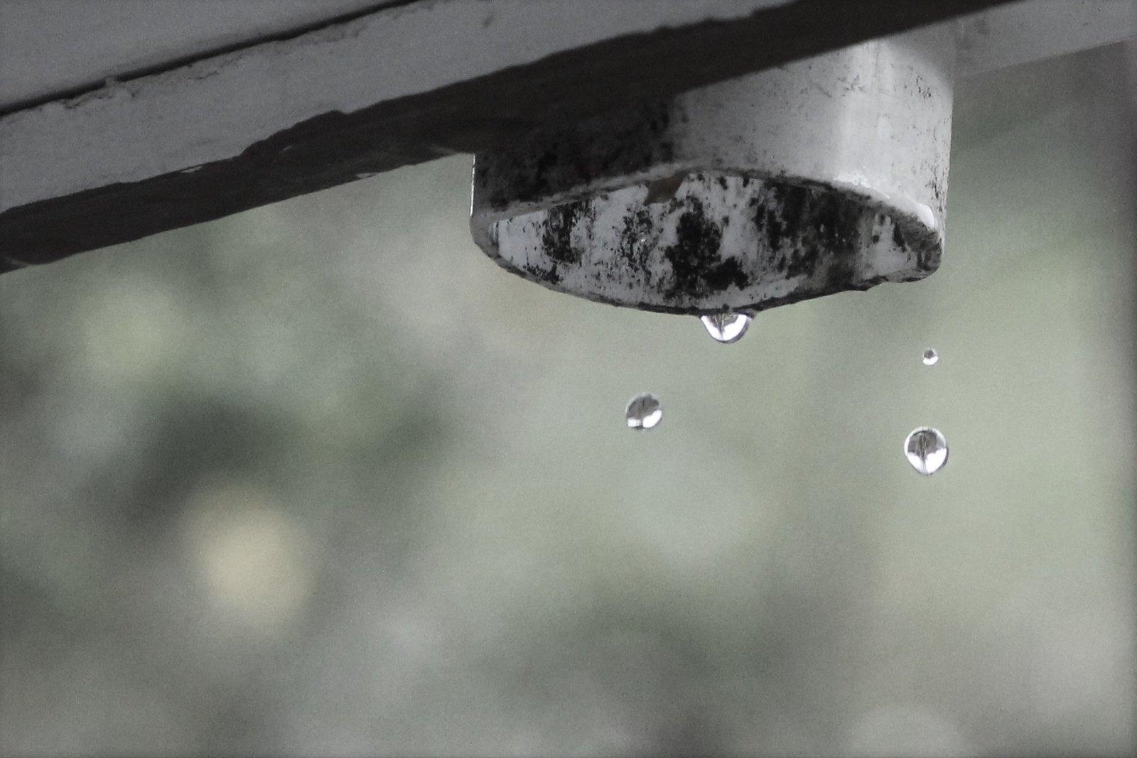 IMG_1368 (Raindrops) (2)