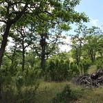 Poison oak, everywhere you look