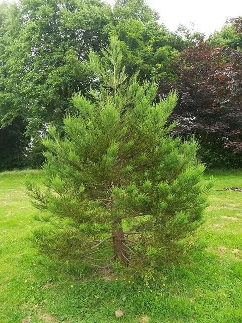 Adopt a Tree Scheme