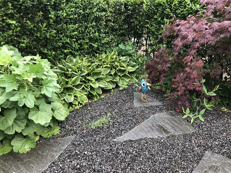 Rainy morning in garden