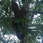 Ausflug der Bienen