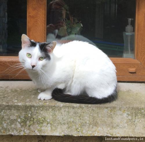 Wed, Jun 13th, 2018 Lost Male Cat - Powerfield, Fedamore, Limerick