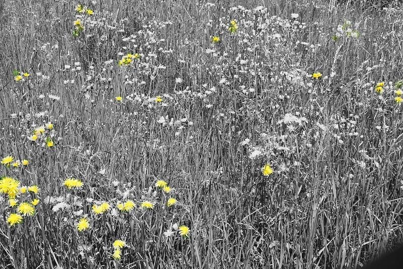 Wild Flowers 12.05.2018