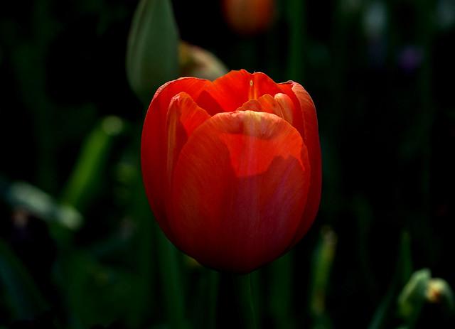 Flower, Sony ILCE-5000, Sony E PZ 18-105mm F4 G OSS