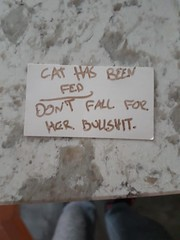 My parents new cat was being super cuddly with me this morning whenever I went near the kitchen. Eventually found this.