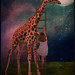 Goodnight giraffe by ~Sincere~