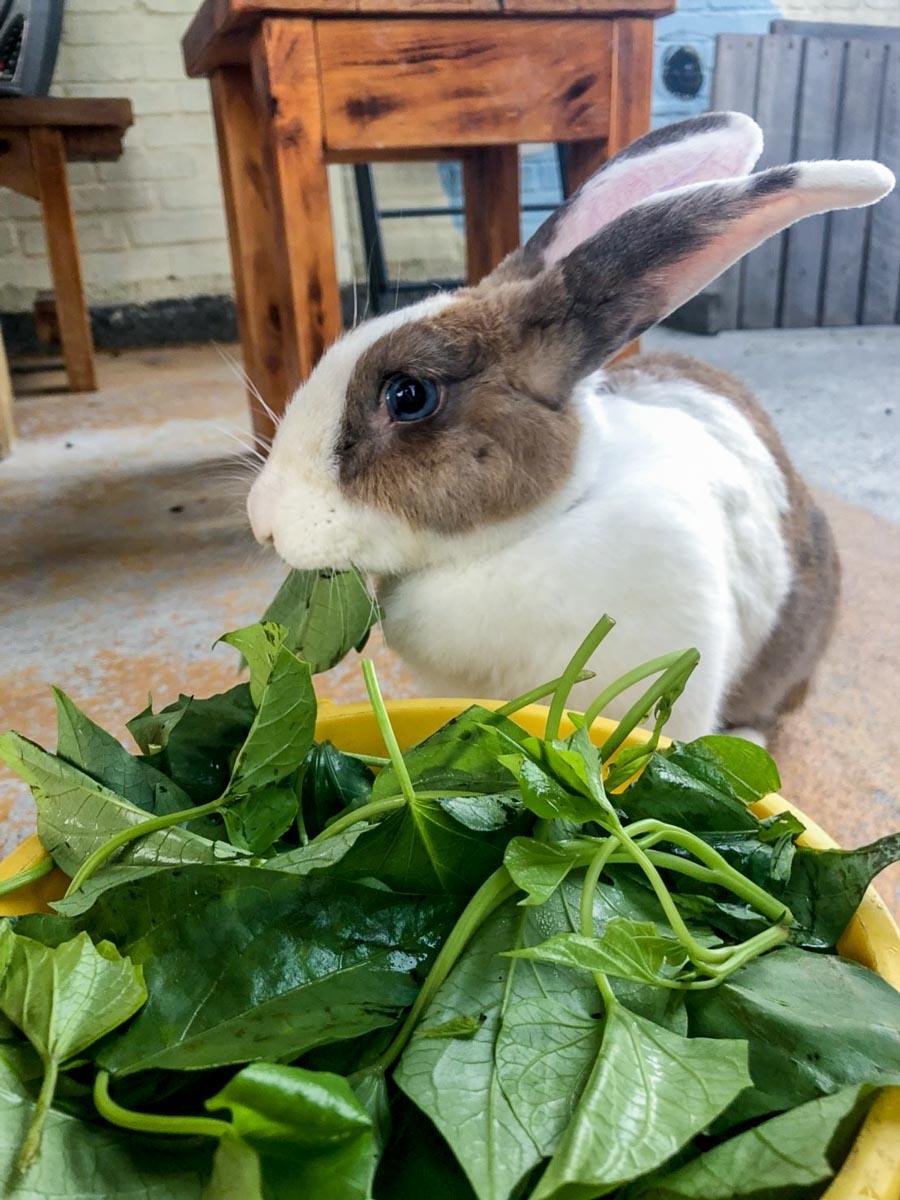 蕭家大院兔子寵物餐廳-12
