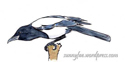 sketch of 1 magpie