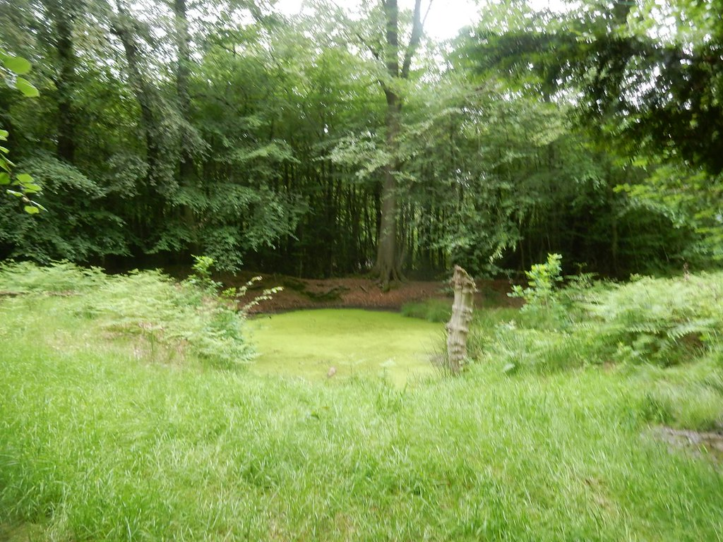 Pond Covered in green stuff. Saunderton Circular via West Wycombe