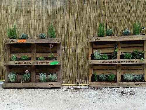 2 jardines verticales colocados en casa corona: realizados con palés reciclados y con 3 filas de vegetación con plantas aromáticas en cada nivel