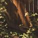 Fence Botanics