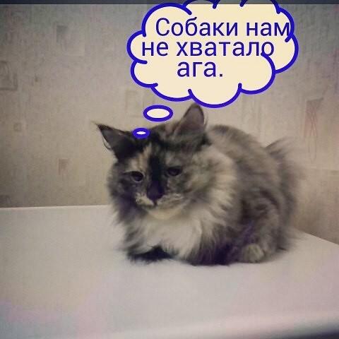 Sonis_think