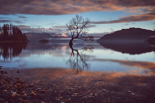 canon eos 6d newzealand tree sunrise mirror reflection lake wanaka winter 2015 sebastianwarneke