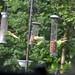 Parakeet (76) Taken through Caravan Window