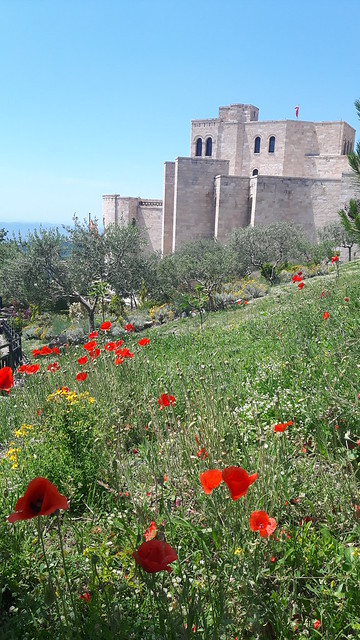 Poppies growing with the Kruje museum and castle in the background