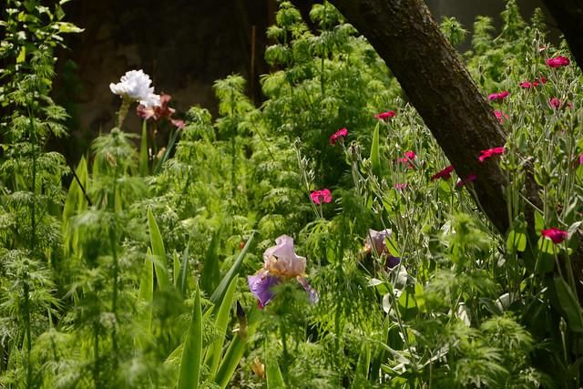 les jardins sont beaux en mai ! - Page 6 41442276075_731bcbf294_z