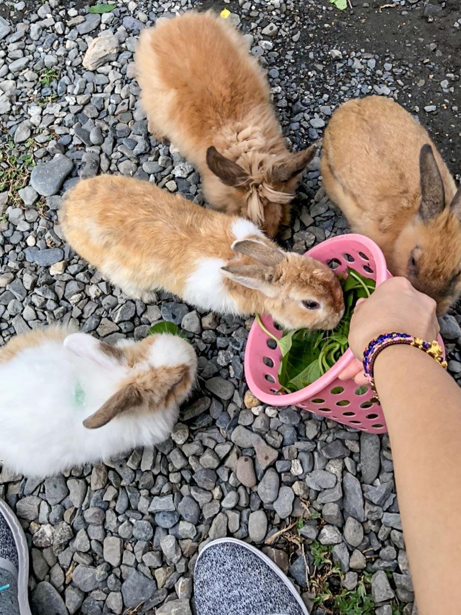 蕭家大院兔子寵物餐廳-11