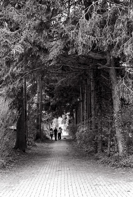 Walking the Treelined Street