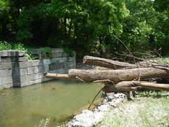 DSCN4073 04 Lock 32 Ash Debris & Erosion