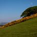 West Kilbride Landmarks (16)