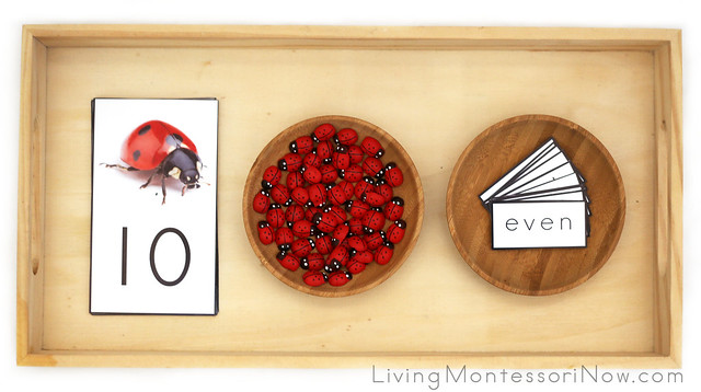 Ladybug Cards and Counters Tray with Odd and Even Labels
