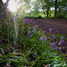last bit of light by Glen Parry Photography