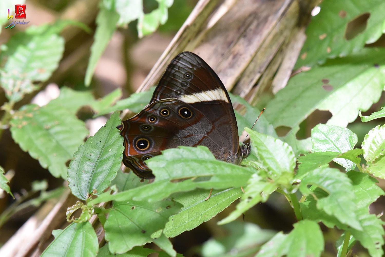 Butterfly_5588