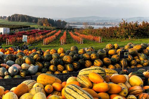 Pumpkins and Wine