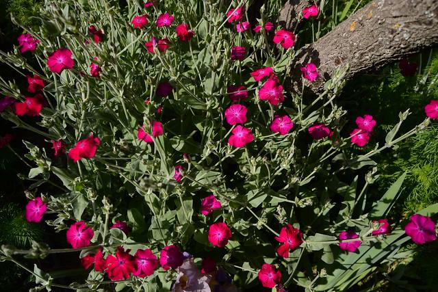 les jardins sont beaux en mai ! - Page 6 28489003648_b7d977eae6_z