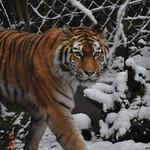 Zoo Zürich Feb. 2018