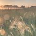 Bartel Grassland Nature Preserve by erin.e.soto