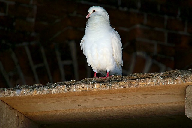 Delightful Dove, Canon EOS M3, Tamron 18-200mm F/3.5-6.3 Di III VC