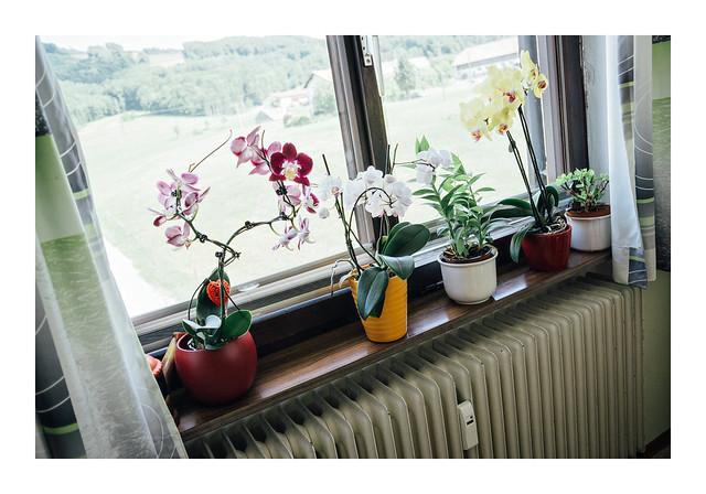 Window, Sony ILCE-6000, Sigma 19mm F2.8 [EX] DN